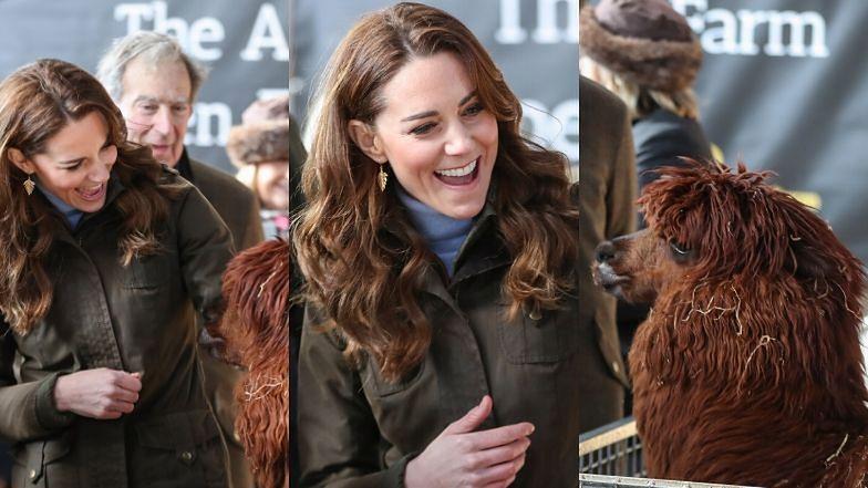 Roześmiana Kate Middleton zachwyca się alpakami podczas wizyty na farmie