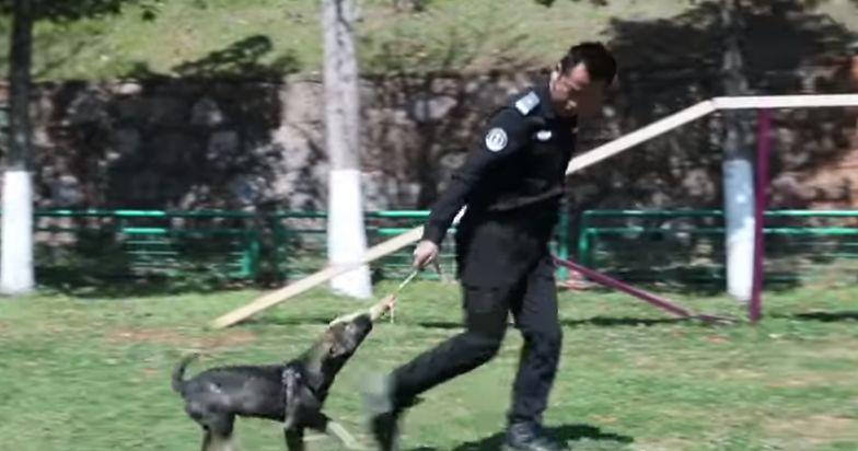 6 sklonowanych psów rozpoczęło służbę w policji