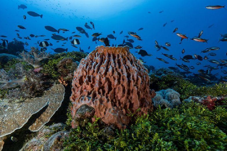 Lek na raka w oceanie? Zwierzęta morskie pomogą chorym