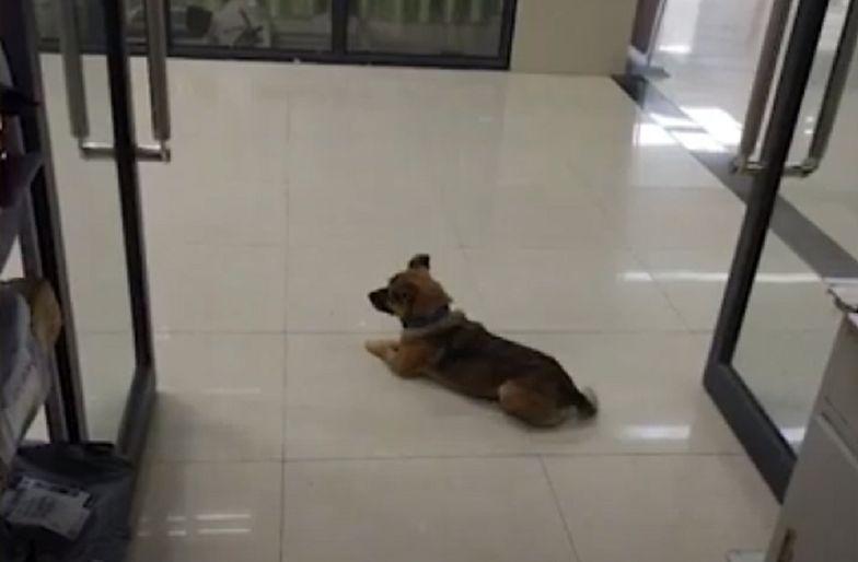 Pies przez 3 miesiące nie ruszył się ze szpitala