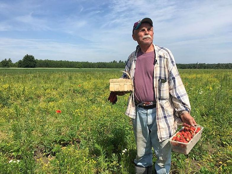 Pan Bogumił od trzech lat udostępnia swoje pole wszystkim, którzy nie boją się schylać po truskawki