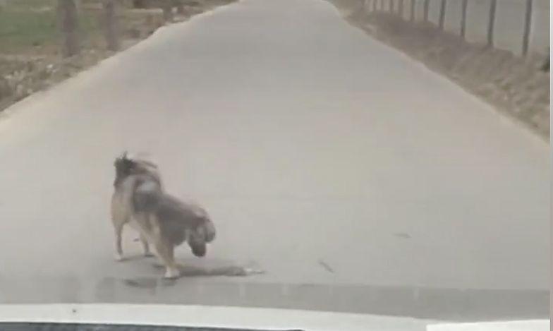 Wzruszające wideo. Pies nie chciał opuścić przyjaciela