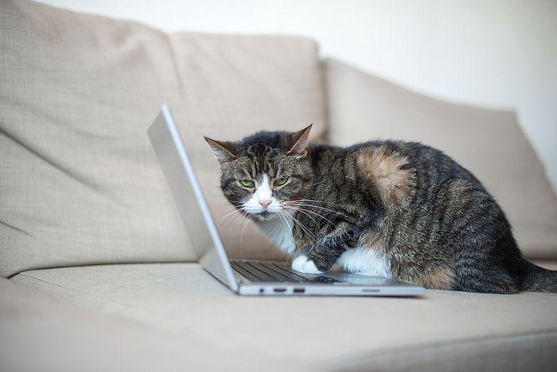 Kot przejmuje Twój komputer? Badacze tłumaczą dlaczego