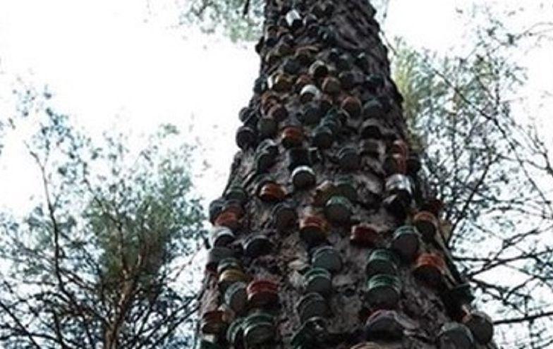 Nietypowy widok w lesie. Strażnikom opadły ręce