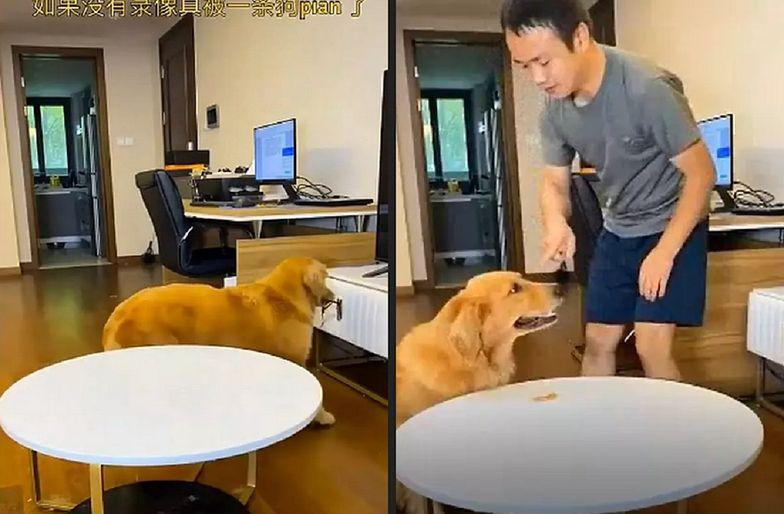 Hit internetu. Ten pies genialnie oszukał swojego pana. I jeszcze zatarł ślady