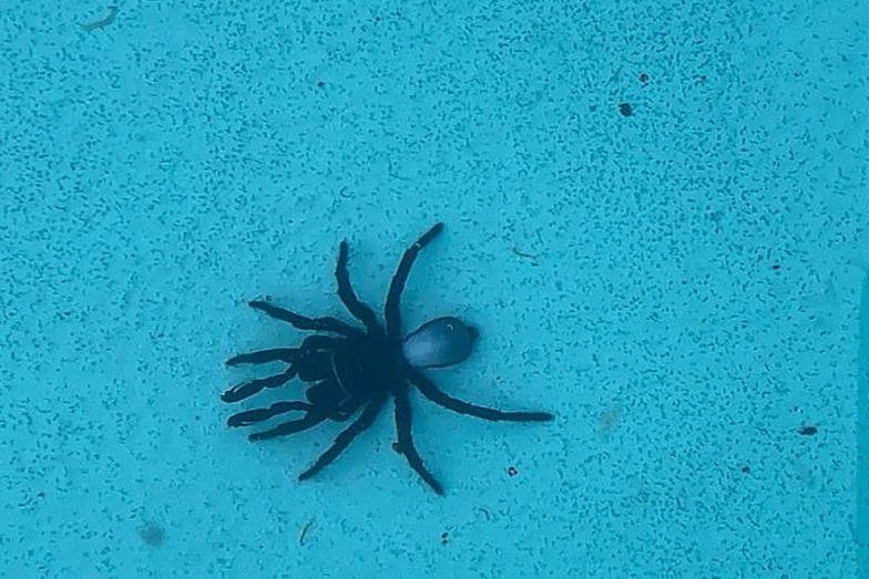 Było ich aż 20! Przerażające odkrycie na dnie basenu