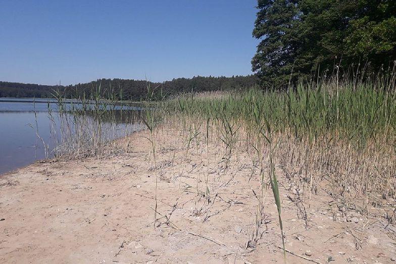 Katastrofa ekologiczna? Elektrownia spuściła wodę w jeziorze Głębokie