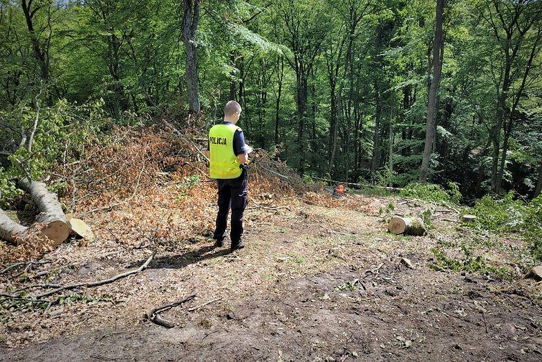 Koszmarny wypadek w lesie. Mężczyzna nie żyje