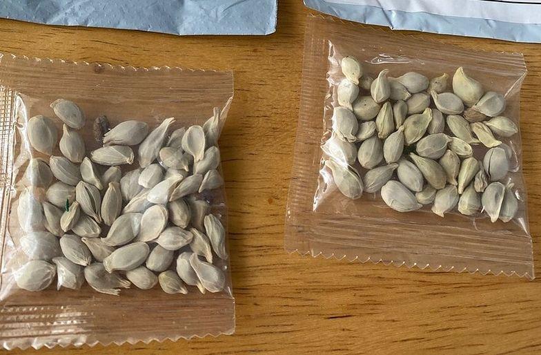 Tajemnicze nasiona z Chin w skrzynkach pocztowych. Ludzie się boją