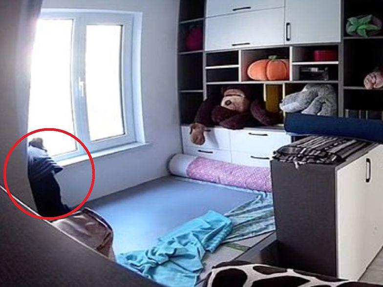 Pies sam w domu. Nagrała go kamera. Internauci nie kryli łez