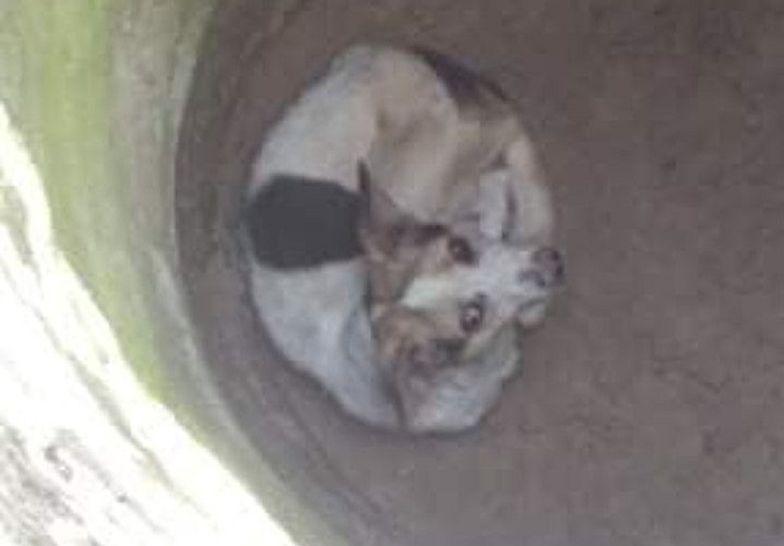 Ktoś wrzucił psa do studni.