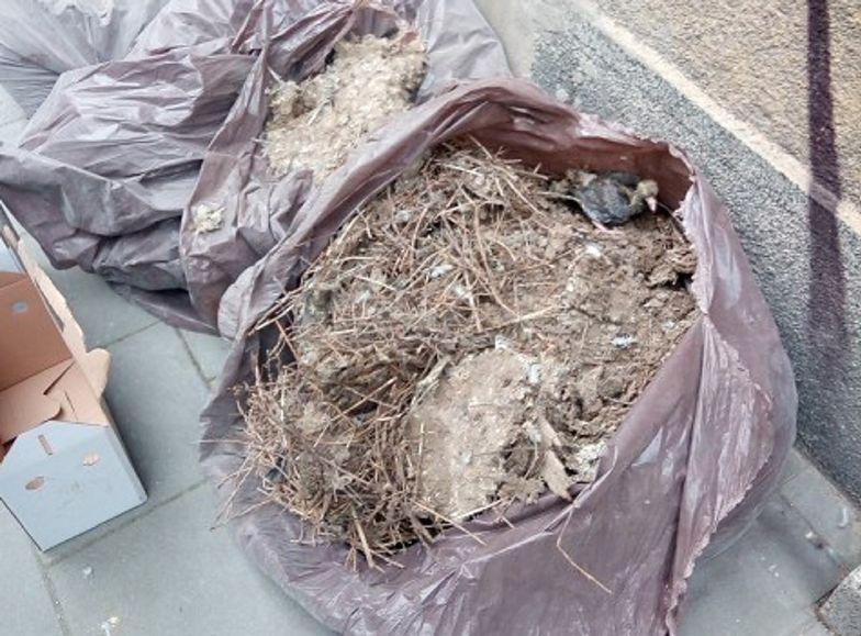 Kraków. Otworzyli worek na śmieci. Nie spodziewali się, co znajdą w środku