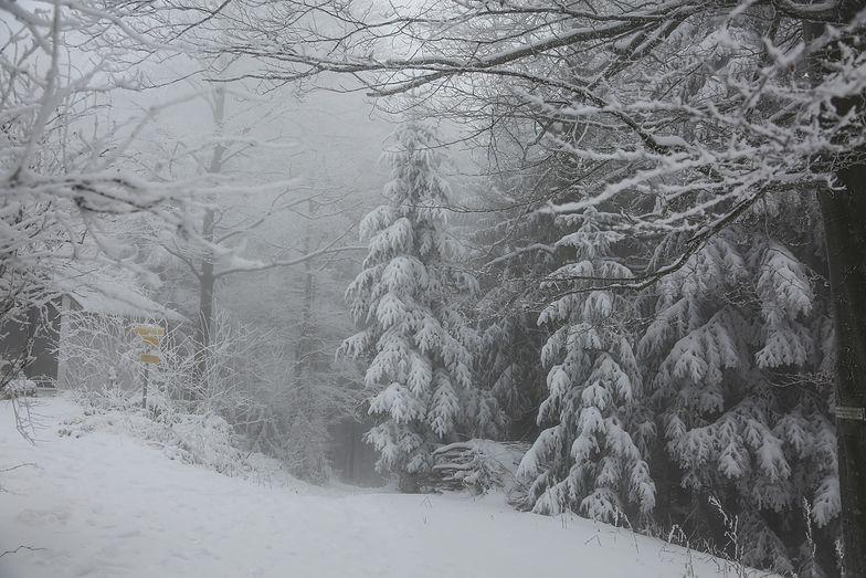 Kiedy w Polsce spadnie śnieg? Prognoza pogody na zimę 2020/2021