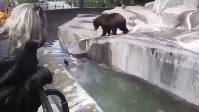 Wybieg dla niedźwiedzi leży kilkaset metrów od bram ZOO