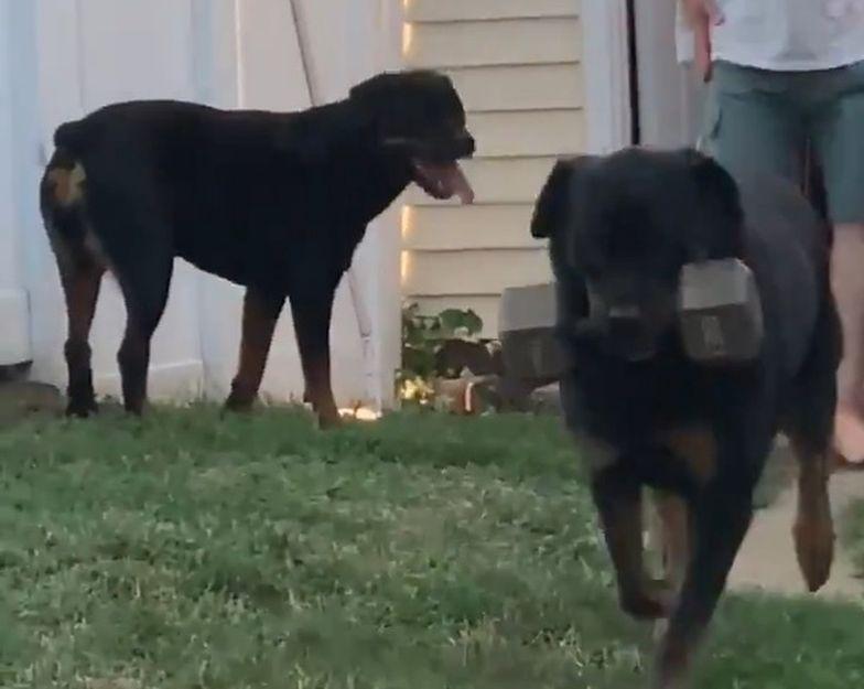Pies ma niesamowite hobby. Film obejrzano już ponad 9 mln razy