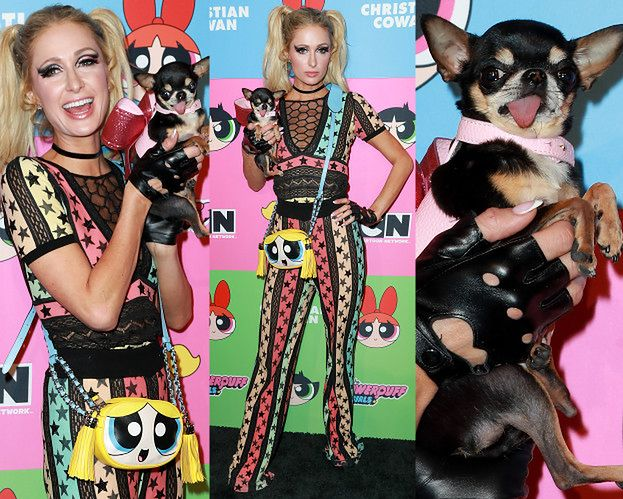 Paris Hilton i jej pies Diamond Baby bawią się na pokazie mody