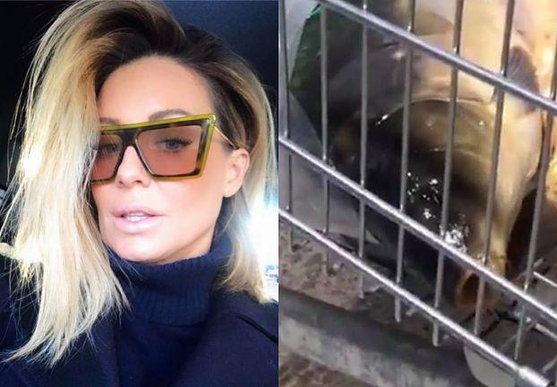"""Małgorzata Rozenek występuje w obronie karpi: """"Kolacja wigilijna związana jest z konaniem!"""""""