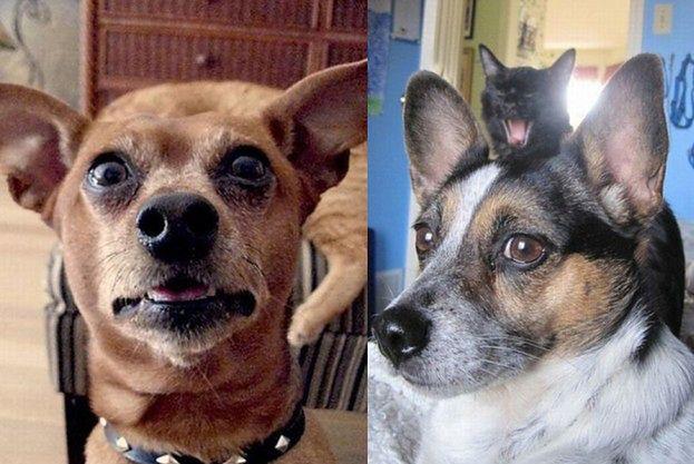 """Psy i koty jako """"MISTRZOWIE DRUGIEGO PLANU""""! (ZDJĘCIA)"""