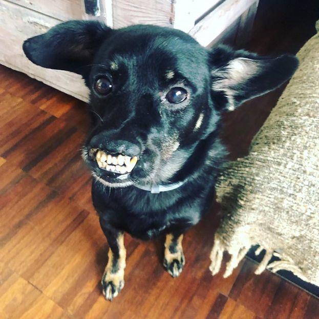 """""""Poznaj mojego psa"""": Niezwykła przyjaźń Leszka Stanka i Vaderka: """"Jest dowodem na to, że warto inwestować uczucia w znajdki"""""""