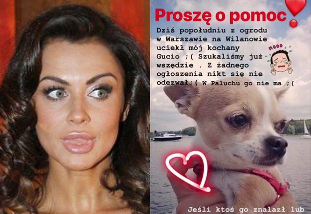 """Natalia Siwiec ZGUBIŁA PSA! """"Z ogrodu na Wilanowie uciekł MÓJ KOCHANY GUCIO!"""""""