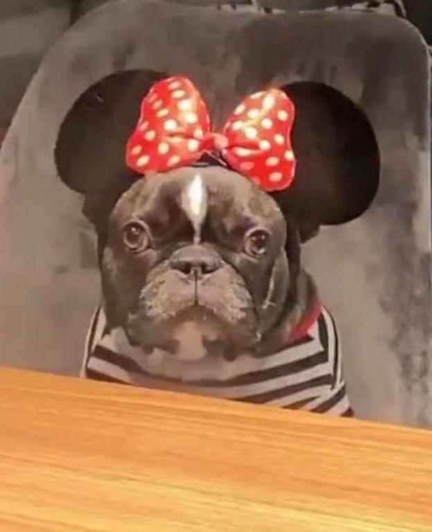 Dramat Deynn: Musi wychodzić z psem NA DACH, bo na ulicy wszyscy chcą sobie z nią robić zdjęcia!