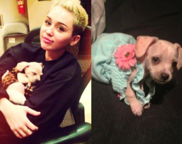 Miley ma kolejnego psa! (ZDJĘCIA)