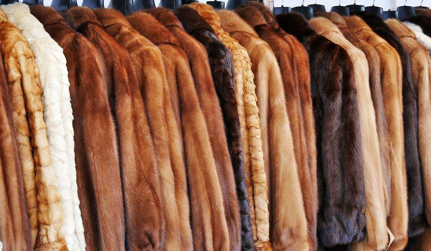 Kto zyska na zakazie handlu skórami? Czy Chińczycy i Rosjanie przejmą polskie norki?