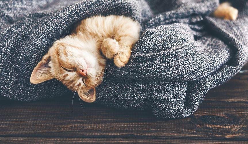 Dziwne zachowania kotów – co chcą nam powiedzieć?
