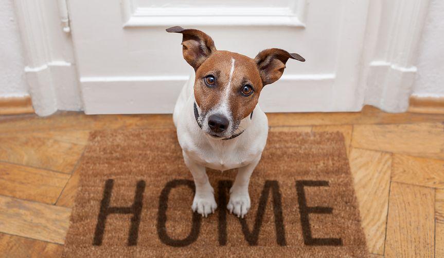 Hotel dla psa albo opiekun. Podejmujemy decyzję przed wyjazdem na urlop
