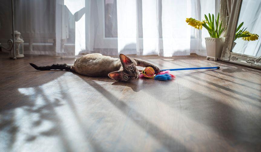 Radosny i aktywny kot. Najlepsze zabawki dla naszego czworonoga