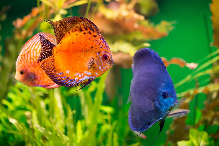 Jak urządzić w domu piękne akwarium?