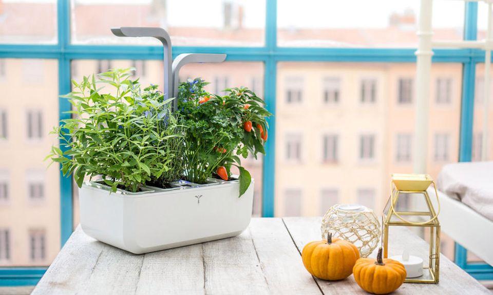 Te gadżety zamienią twoje mieszkanie w prawdziwy ogród