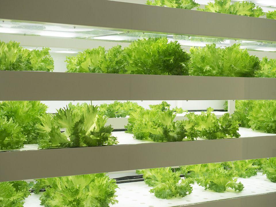 Warzywa w Kosmosie