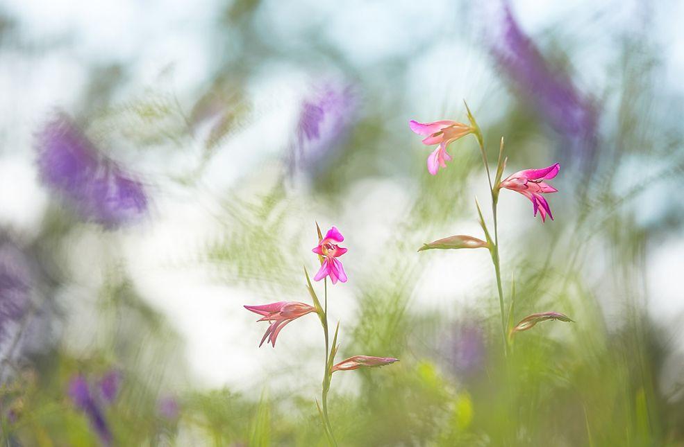 Nagroda główna w Nature Photographer of the Year 2015 oraz zwycięzca kategorii Rośliny i grzyby.