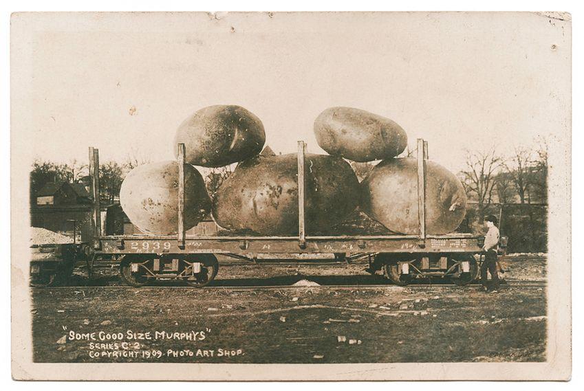 11 Ile z takich ziemniaków można zrobić frytek? © wired.com