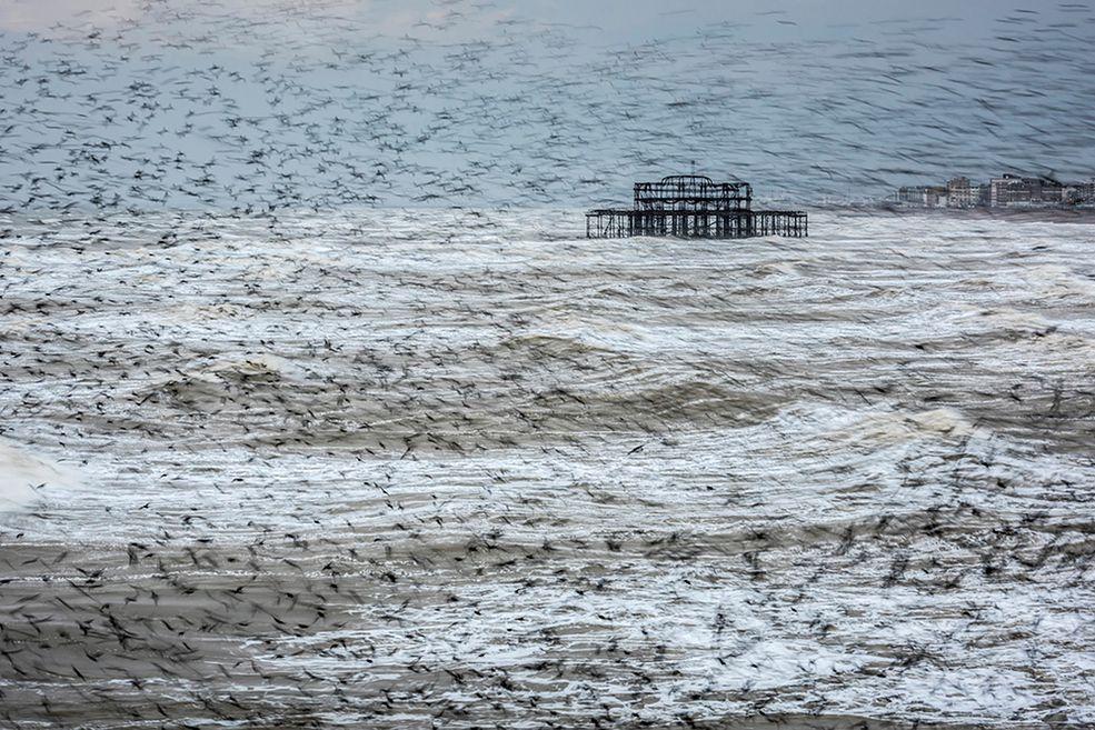 """Właśnie zostali ogłoszeni zwycięzcy plebiscytu Take a View Landscape Photographer of the Year 2016. Pierwsze miejsce zdobył Matthew Cattell za zdjęcie pod tytułem """"Starling Vortex, Brighton, East Sussex, England"""", przedstawiające gromady ptaków, latających nad subtelnie wzburzonymi wodami."""