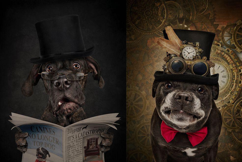 Artystka z Melbourne jest prawdziwą specjalistką w dziedzinie psie fotografii. Portrecistka stwierdziła, ze nudzą je konwencjonalne zdjęcia i podejmie się czegoś kompletnie nowego. W ten sposób zaczęła uczłowieczać swoich bohaterów.