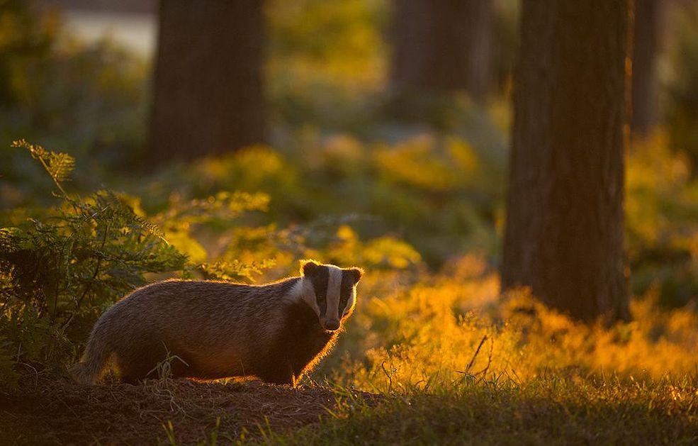 British Wildlife Photography Awards to konkurs, którego początki sięgają 2009 roku. Jego głównymi celami są: rozpoznanie talentów fotografów z UK oraz pokazanie różnorodności ich spojrzeń, przedstawienie piękna przyrody Wielkiej Brytanii, zaprezentowanie najlepszych zdjęć oraz skoncentrowanie się na ochronie naturalnego środowiska.