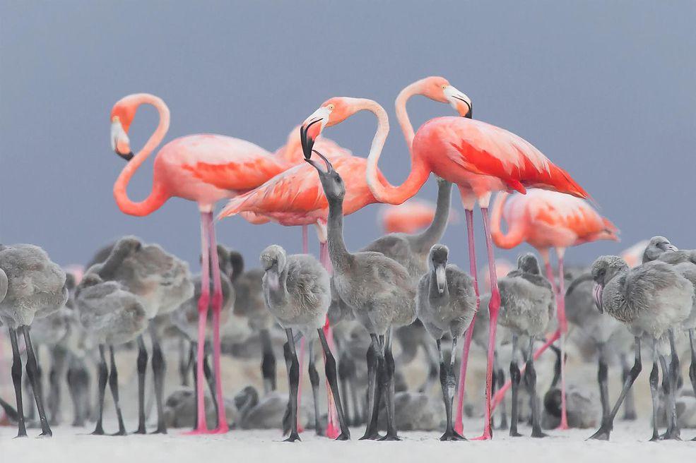 Do konkursu Bird Photographer of the Year 2017 zgłosiły się tysiące specjalistów z dziedziny fotografowania ptaków z całego świata. Na przykładzie tych zdjęć można śmiało powiedzieć, że fotografia uskrzydla, uczy latać. Na pewno niejeden z uczestników niejednokrotnie poczuł, że buja w chmurach, próbując ująć wymarzony okaz.