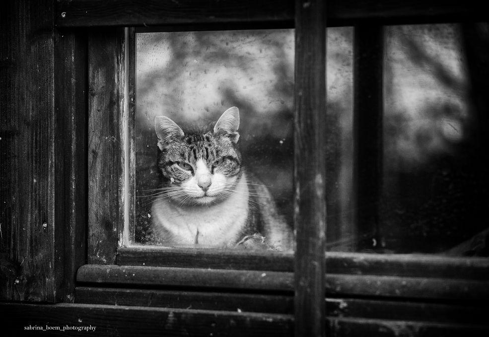 """Zanim Sabrina Boem odwiedziła swoje pierwsze schronisko, zakładała, że wszystkie koty żyją jak jej własne – Sissi i Ricky – szczęśliwie ze swoimi ludźmi. Jej przyjaciółka Elisa powiedziała jej o schroniskach oraz specjalnych """"sanktuariach"""" dla kotów, w których mogą żyć spokojnie. Przez ostatnie 2,5 roku Sabrina odwiedzała regularnie te miejsca, poznając zwyczaje kotów i ludzi, którzy się nimi opiekują."""