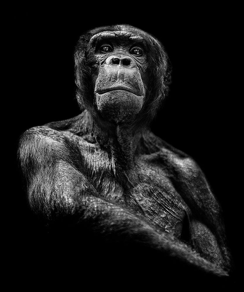 """Geneza. """"Punktem wyjścia, który zainicjował cały proces twórczy cyklu """"inHuman"""" to zwykłe, przypadkowe wyjście do ogrodu zoologicznego w Berlinie. Pierwotnie wydawało mi się, że moja obecność w małpiarni będzie jedynie kolejnym przystankiem zaplanowanego wcześniej dnia. Od tego momentu jednak wszystko się zaczęło"""" - opowiada PawełBogumił."""