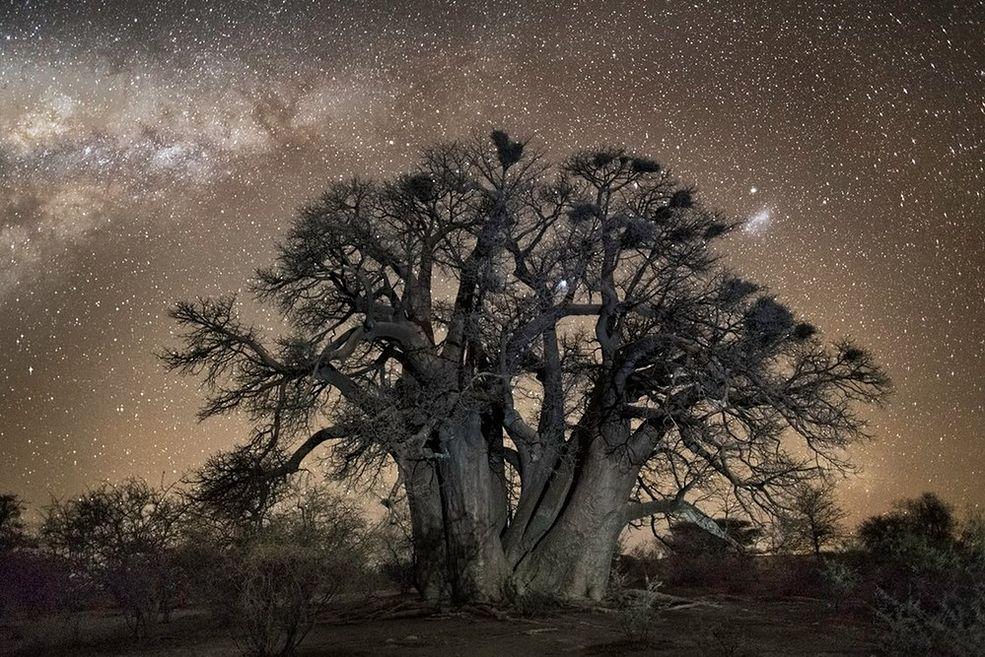 Berth Moon wykonywała zdjęcia do cyklu Diamond Nights w odległych miejscach Afryki południowej, w Botswanie, Namibii i RPA.