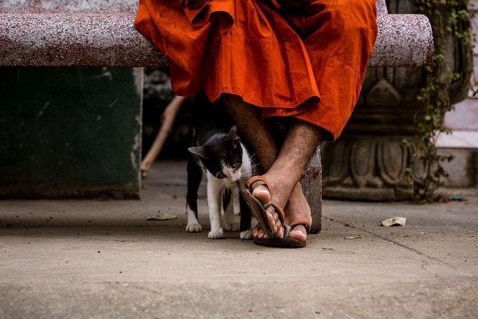 Paola Stella to włoska fotografka, która kocha podróżować. Dwa lata temu pojechała na Bali i spędziła tam kilka dni, fotografując psy żyjące na plaży. Wydawały się być bardzo spokojne i szczęśliwe, a fotografowanie ich sprawiało Paoli radość. Wtedy zaczęła swoją serie zdjęć, w której ukazuje życie zwierząt domowych w różnych miejscach świata.