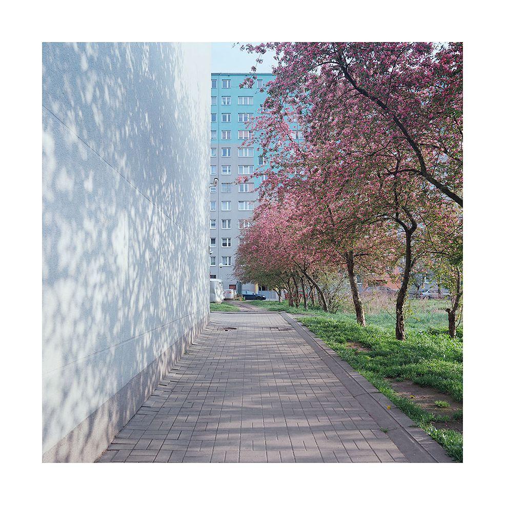 """Tytuł wystawy odnosi się do zacierania pamięci we Wrocławiu o dawnych mieszkańcach miasta. Staje się ono jak palimpsest – można wymazać z niego dowolną treść, by zastąpić nowym sensem. Proces taki przebiegał przez dziesięciolecia, a jednym z jego znamiennych przykładów jest likwidacja cmentarzy i przeznaczenie """"odzyskanych"""" terenów na przykład pod zabudowę wielorodzinną. Autor projektu fotograficznego rejestruje przy pomocy aparatu te miejsca, w których nadano ziemi nowe treści."""