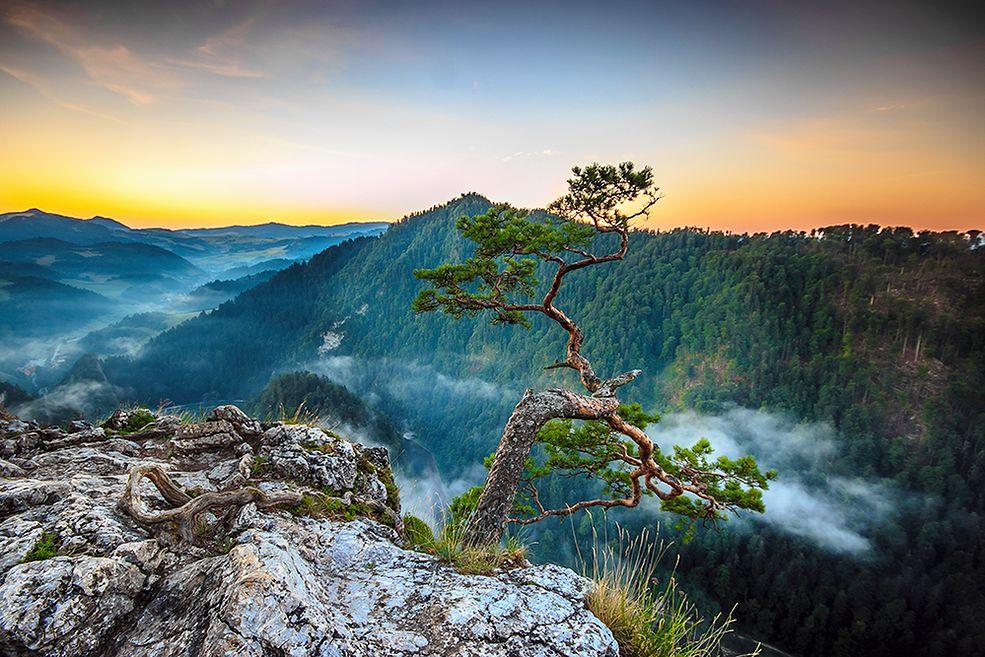 Miłością fotografki są Tatry, a jej największym marzeniem jest spędzenie późnych lat w bacówce na Podhalu, gdzie w końcu zazna spokoju od zgiełku Krupówek.