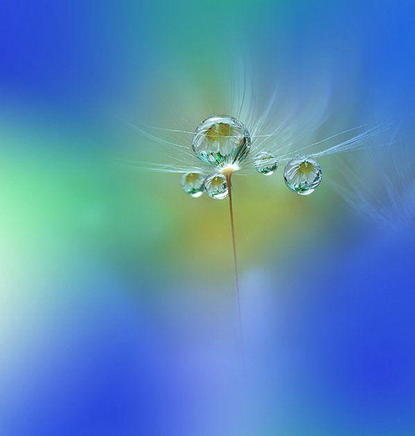 Piękno świata makro często nam umyka ze względu na jego rozmiar, a warto się nad nim pochylić, co często trzeba rozumieć dosłownie. Świetnym przykładem dobrze wykonanej fotografii makro są zdjęcia kwiatów i kropli Juliany Nanchevej.