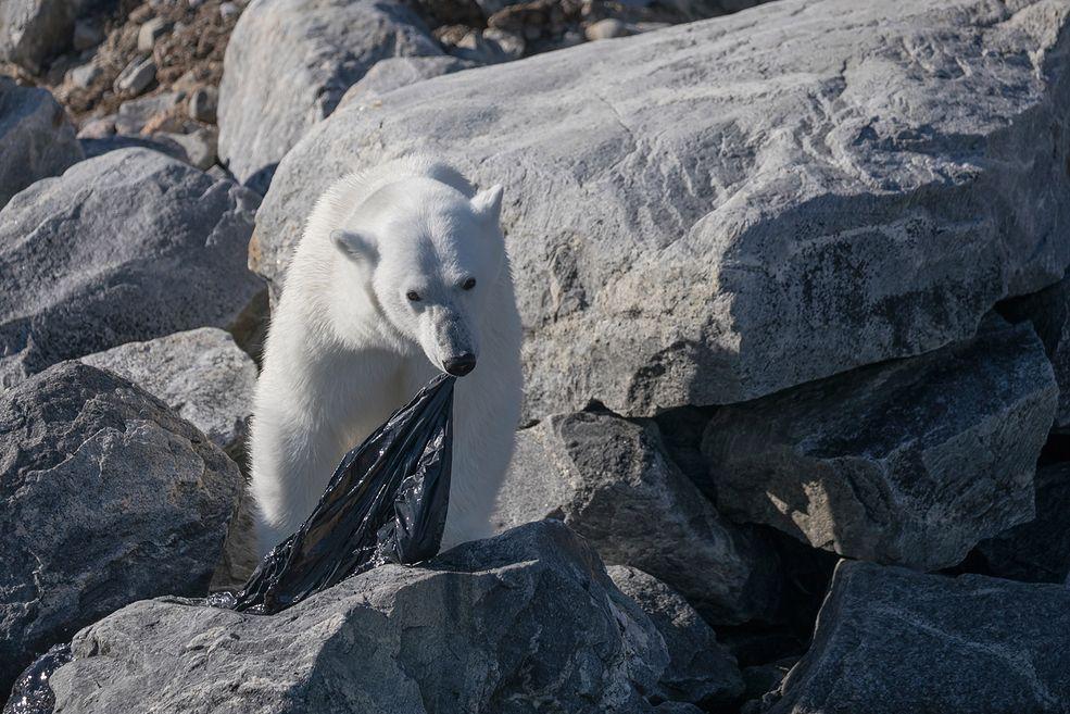 Fabrice Guérin jest francuskim fotografem przyrody. Uwielbia wybierać się w mroźne, północne rejony Europy. Jednym z jego ulubionych miejsc jest Norweski archipelag Svalbard. Właśnie tam, podczas trzeciej wyprawy w to miejsce miał okazję obserwować i fotografować poszukującego jedzenia niedźwiedzia polarnego.