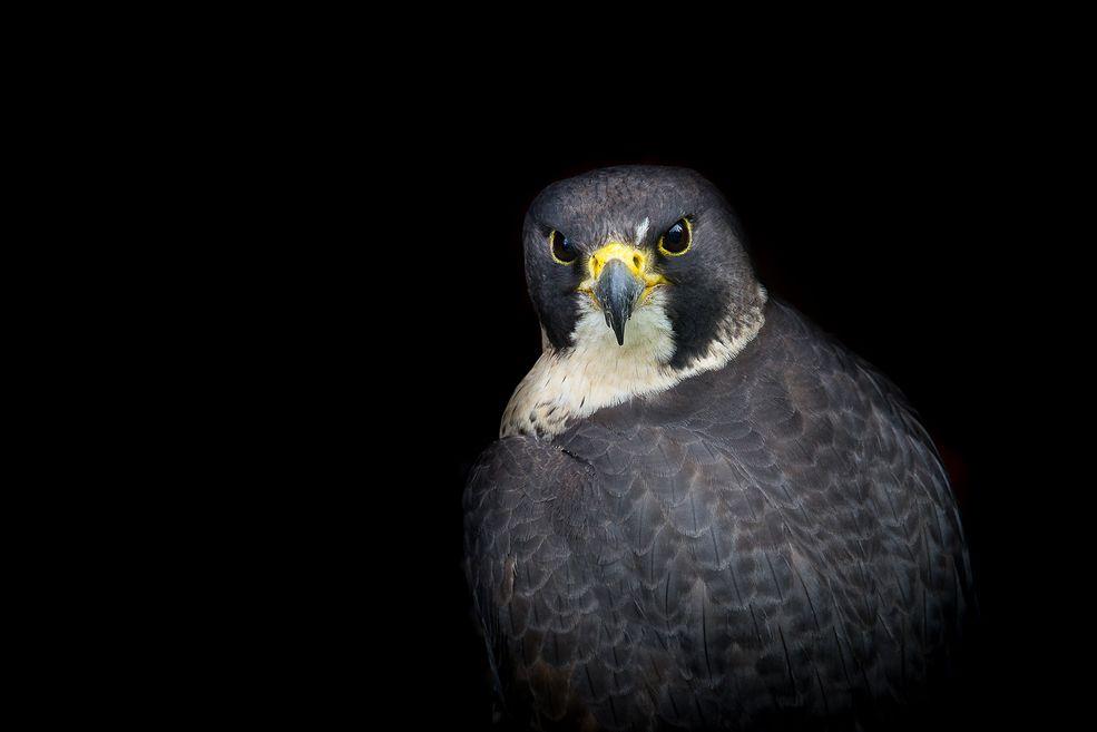 Adriana Pytlowana jest młodą fotografką z Opola. Często zdarza jej się fotografować z lotu ptaka - posiada kwalifikacje niezbędne by legalnie wykonywać loty dronami. Zdarza sięjej też portretować ptaki.