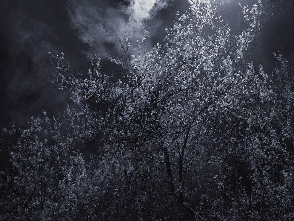 """Fotograf mówi, że dla niego noc jest prowokacją oraz sposobem na znalezienie odosobnienia. W swoim projekcie """"Blossom"""" przedstawia kwitnące drzewa skąpane w mroku. Jedynym obiektem na jego zdjęciu jest drzewo z pojedynczymi delikatnymi kwiatami, odizolowane od reszty świata. Rene Koster dla podkreślenia kształtu roślin stosuje specyficzne oświetlenie, które pozwala wyłonić je z mroku."""