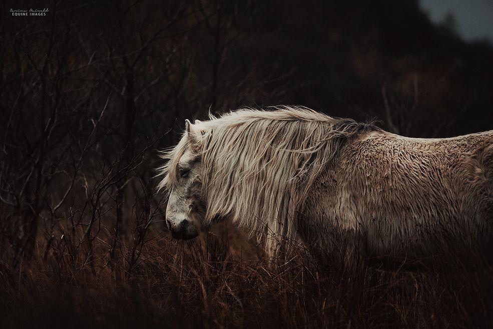 Carina Maiwald wybrała się do Szkocji w zeszłym roku, by odpocząć i pozwolić swojej psychice się wyciszyć. Fotografka wspomina, że uczucia są po to, by je przeżywać, a dopóki nie znalazła się na środku pustej łąki nie mogła sobie na to pozwolić. Gdy już była na miejscu, zachwyciła ją dzikość i surowość panujących tam warunków.